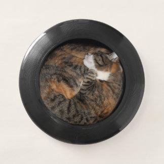 Tabby-Miezekatze, die in einem Kreis schläft Wham-O Frisbee