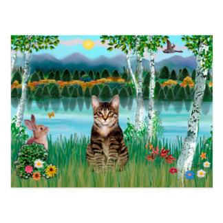 Tabby-Tiger-Katze - Birken Postkarten