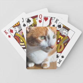 Tabbykatzennahaufnahme Spielkarten
