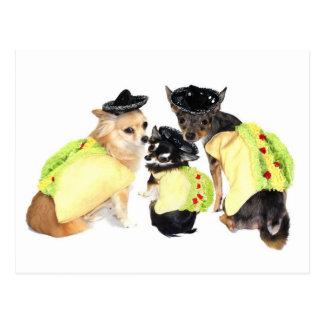 Taco-Chihuahua Postkarte