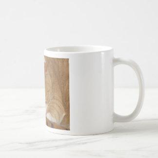 Taco die Siesta-Katze Kaffeetasse