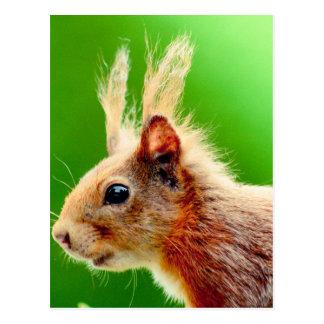 Tageichhörnchen Postkarte