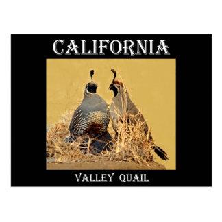 Tal-Wachteln (Kalifornien) Postkarte
