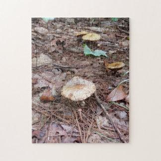 TAN-Farbpilze in den Hochländern N.C. Forest Puzzle