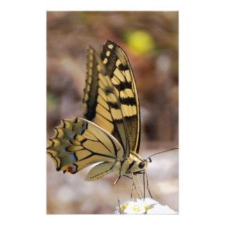 TAN und weißer Schmetterling Druckpapier