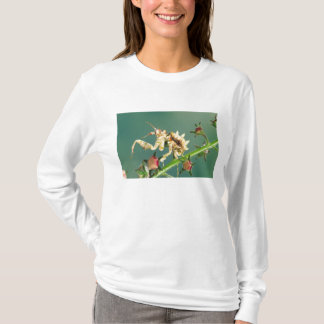 Tansanischer BlumeMantis, Pseudocreboter T-Shirt