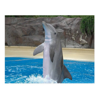 Tanzen-Delphin-Postkarte Postkarte