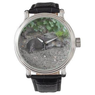 Tapir, der auf Sand schläft Uhr