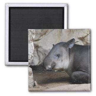 Tapir-Magnet Quadratischer Magnet