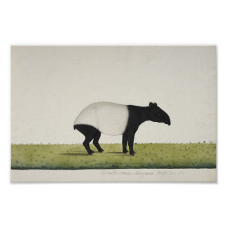 Tapir Posterdrucke