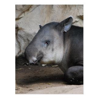 Tapir-Postkarte Postkarte