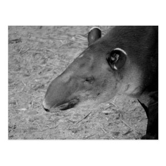 Tapirhauptschwarzweiss-Zootier Postkarte