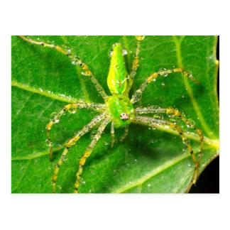 Tau auf einer grünen Luchs-Spinne Postkarte