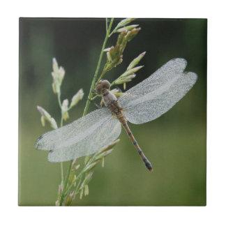 Tau bedeckte Darner Libelle Keramikfliese