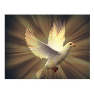 Taube des Friedens Postkarte