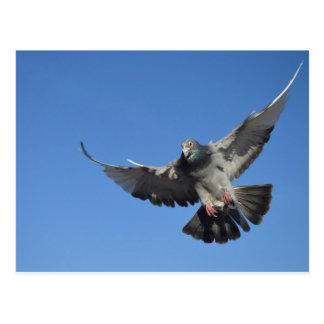 Taube im Flug Postkarte