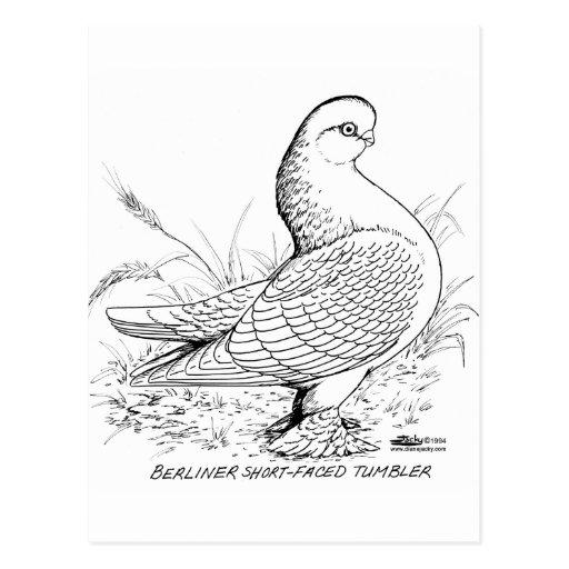 Taube von Berlin Schwarzweiss Postkarten