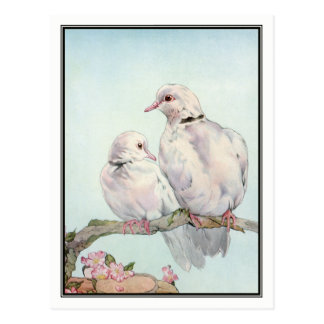 Tauben durch E.J. Detmold Postkarte