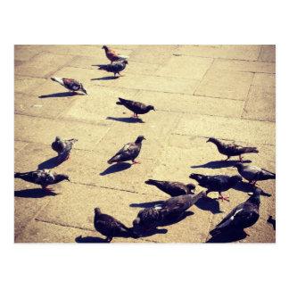 Tauben in Venedig Postkarte