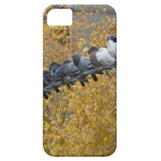 Tauben iPhone 5 Schutzhüllen