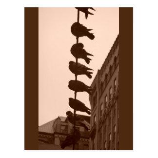 Tauben über dem Times Square, New York - Postkarte
