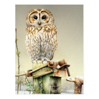 Tawny Eule in der Schnee-Kunst-Aquarellpostkarte Postkarte