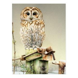 Tawny Eule in der Schnee-Kunst-Aquarellpostkarte Postkarten