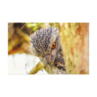 TAWNY FROGMOUTH QUEENSLAND AUSTRALIEN LEINWANDDRUCK