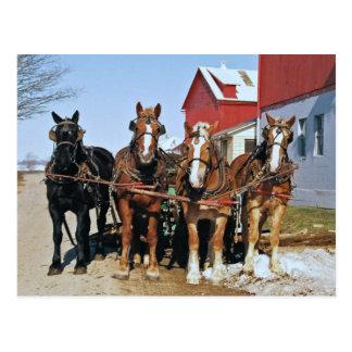 Team der amischen Pferdepostkarte Postkarte