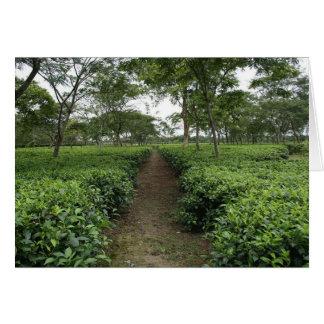 Teatulia Tee-Gärten, Tetulia, Bangladesch Karte