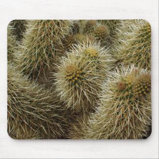 Teddybär-Kaktus-Nahaufnahme Mousepad