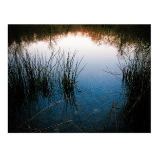 Teich-Reflexionen Postkarte