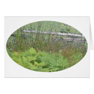 Teich-Wasser-Garten-Wasserlilie-Blume Karte