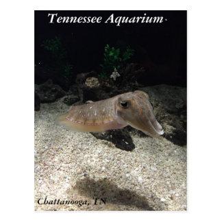 Tennessee-Aquarium-Kopffüßer-Postkarte Postkarte