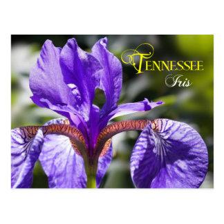 Tennessee-Staats-Blume: Iris Postkarte