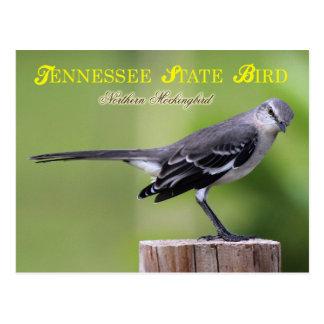 Tennessee-Staats-Vogel - Nordspottdrossel Postkarte