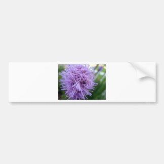 Tentakel-Spinnen-Veilchen-Blume Autoaufkleber