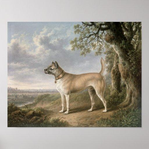 Terrier auf einem Weg in einer bewaldeten Landscha Posterdruck