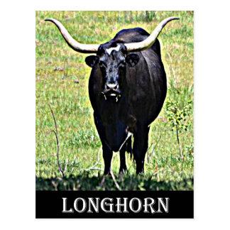 Texas Longhorn Postkarte