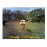 Texas Longhorn - Postkarte