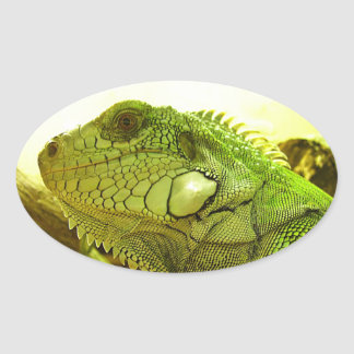 the Green iguana Sticker