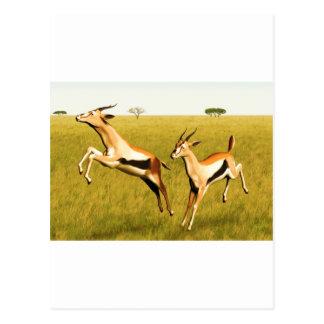 Thomsons Gazelle Postkarte