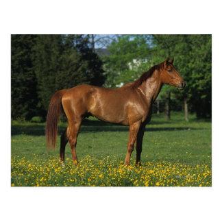 Thoroughbred-Pferd in den Blumen Postkarte
