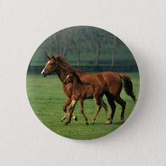 Thoroughbred-Stute u. Fohlen 3 Runder Button 5,1 Cm