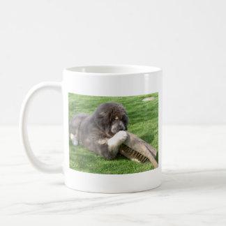 Tibetanischer Mastiff Jampo mit Besen Kaffeetasse