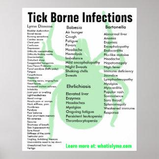 Ticken getragenes Infektions-Symptom-pädagogisches Poster