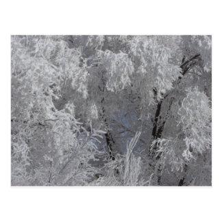Tiefe Frost Morgen-Postkarte Colorados Postkarte
