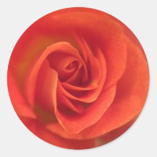 Tiefer Aprikosen-Rosenstrudel Runder Aufkleber
