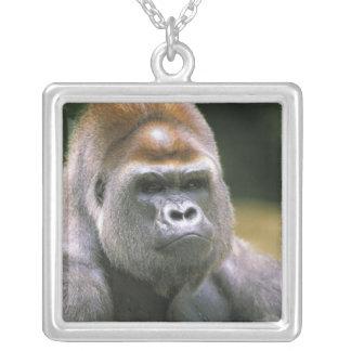 Tieflandgorilla. Gorilla-Gorilla Versilberte Kette