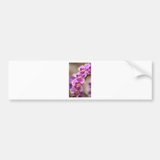 Tiefrosa Phalaenopsis-Orchideen-Blumen-Kette Autoaufkleber